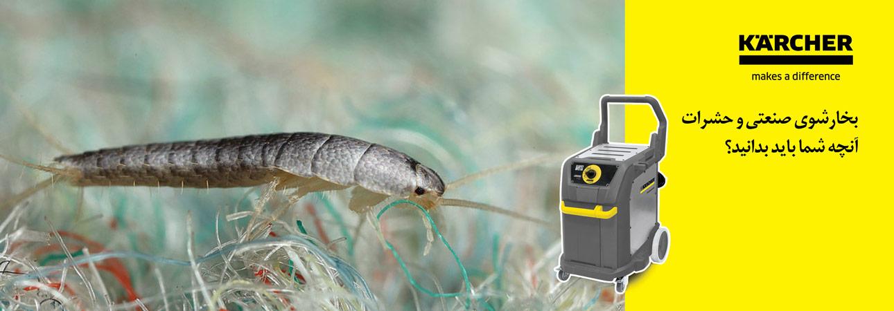 بخارشوی صنعتی و حشرات - آنچه که شما باید بدانید
