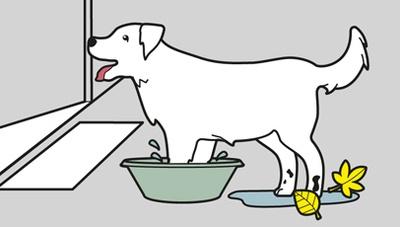دستگاه شستشوی حیوانات