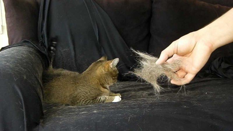 نظافت موی حیوانات خانگی