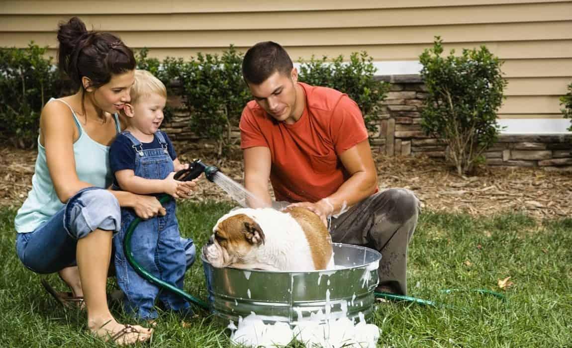 شستشوی حیوان خانگی
